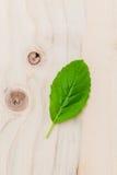 Alternative medicine fresh holy basil leaves on wooden backgroun Royalty Free Stock Photography