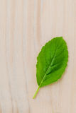 Alternative medicine fresh holy basil leaves on wooden backgroun Royalty Free Stock Photo