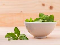 Alternative medicine fresh holy basil leaves Stock Photos