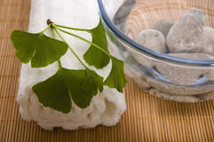 Alternative medicine. ginkgo biloba therapy Royalty Free Stock Images