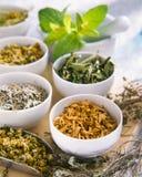 Alternative Medicine. Herbal Therapy. Healing plants. stock photo