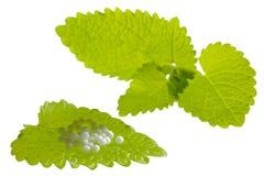 Homeopathy Royalty Free Stock Photo