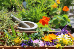 Alternative medicine with medical plants. One picture of a collection with homeopathy plants Stock Photos