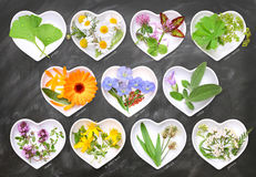 Alternative Medicine with medicinal plants Royalty Free Stock Images