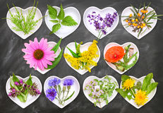 Alternative Medicine with medicinal plants 2 Royalty Free Stock Photos