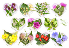 Alternative Medicine with medicinal plants 3 Stock Photos