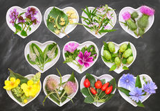 Alternative Medicine with medicinal plants 3 Royalty Free Stock Photo