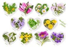 Alternative Medicine with medicinal plants Stock Photo