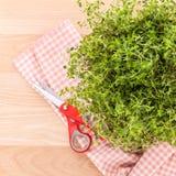 Alternative mediterranean medicinal plants lemon thyme . Stock Images