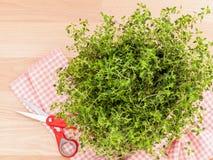 Alternative mediterranean medicinal plants lemon thyme . Royalty Free Stock Photography