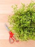 Alternative mediterranean medicinal plants lemon thyme . Stock Image