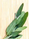 Alternative Mittelmeerheilpflanzen Salvia-officinalis oder stockfotos