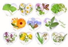 Alternatywna medycyna z leczniczymi roślinami 1 obrazy royalty free