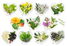 Alternatywna medycyna z leczniczymi roślinami Obraz Royalty Free
