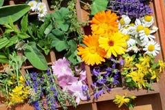 Alternatywna medycyna z medycznymi roślinami Zdjęcia Stock
