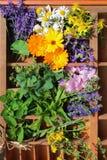 Alternatywna medycyna z medycznymi roślinami Obrazy Royalty Free