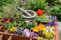 Alternatywna medycyna z medycznymi roślinami Zdjęcia Royalty Free