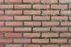 Alternbacksteinmauer bedeckt im Moos Stockbild