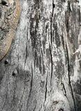Altes Apfelbaum-Stammbeschaffenheitsmuster Lizenzfreie Stockfotografie