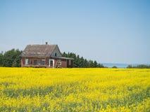 Altes aufgegliedertes Haus und gelbes Feld. Stockbild