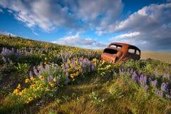Altes Auto im WIldflower-Garten stockfotografie