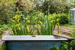 Altes Bad und Blumen Stockfoto