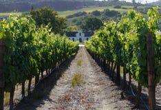 Altes Bauernhaus im Weinberg, Südafrika Lizenzfreies Stockfoto