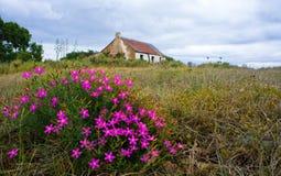 Altes Bauernhaus mit rosa Blumen Lizenzfreies Stockbild