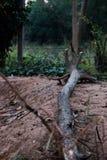 Altes Bauholz, das aus den Grund liegt lizenzfreie stockbilder