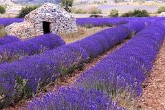 Altes borie und Lavendelfeld in Provence, südlich von Frankreich lizenzfreie stockbilder