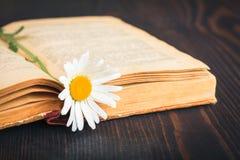 Altes Buch und Gänseblümchenblume lizenzfreies stockbild