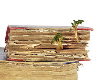 Altes Buch, von dem Sprösslinge keimte Stockfotografie