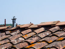 Altes Dach mit Antifallsystem Stockbilder