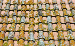 Altes Dach mit Moos Stockfotos