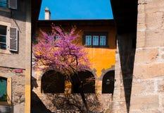 Altes Dorf in Lavaux, nahe Montreux, die Schweiz Stockfoto