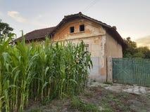 Altes Dorfhaus mit kleinem Maisfeld lizenzfreie stockfotos