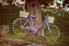 Altes Fahrrad ein alter Baum im Dorf Tihany von Ungarn Stockbilder