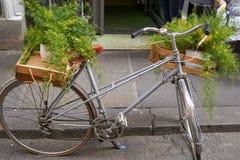 altes Fahrrad mit Anlagen Lizenzfreies Stockfoto