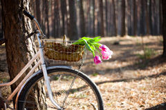 Altes Fahrrad mit Blumen im Korb, das Holz Lizenzfreie Stockfotos