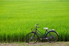 Altes Fahrrad mit Paddyfeldhintergrund Stockfotos