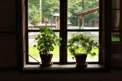 Altes Fenster Browns mit Blumen stockfotografie