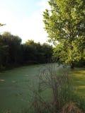 Altes Flussbett Lizenzfreie Stockfotografie
