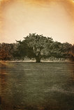 Altes Foto des Baums Stockfotografie