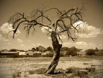 Altes Foto des toten Baums Stockfoto