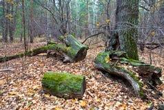 Altes gesägtes Holz Stockfotos