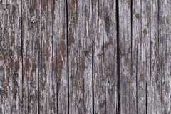Altes graues Brett umfasst mit Pilz und Moos Stockfoto
