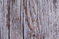 Altes graues Brett umfasst mit Pilz und Moos Stockbild