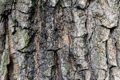 Altes hölzernes Baumrinde-Beschaffenheits-Hintergrund-Muster stockfoto