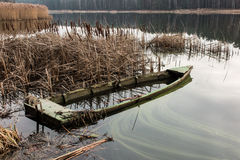 Altes hölzernes Boot voll des Wassers in den Schilfen Lizenzfreies Stockfoto