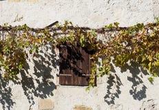 Altes hölzernes Fenster schließt unter einem Rebstock und seinen Schatten auf einem rustikalen weißen Wandhintergrund Fensterläde Stockfotos